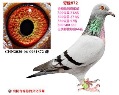 �n白女孩(宏翔三�P特比�C合66名)