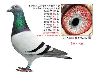 (5次)530公里,五�P��王(�A��十多W)