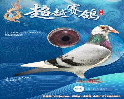 2021年幼鸽0352977