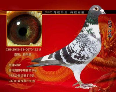 贵州平翔赛鸽中.决赛119名