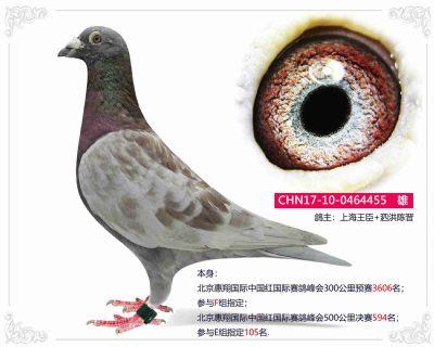 北京惠翔中国红国际赛鸽峰会500公里决赛594名