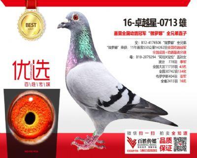 《卓越星》全国幼鸽冠军全兄弟直子-0713