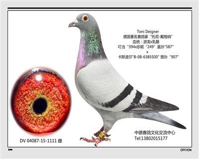 DV 05950-15-1111雌