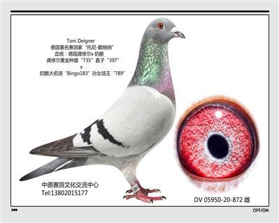 DV 05950-20-872雌